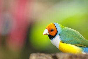 Oiseau au mariposario de Benalmadena