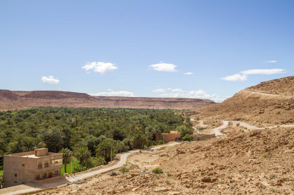 Palmeraies du désert