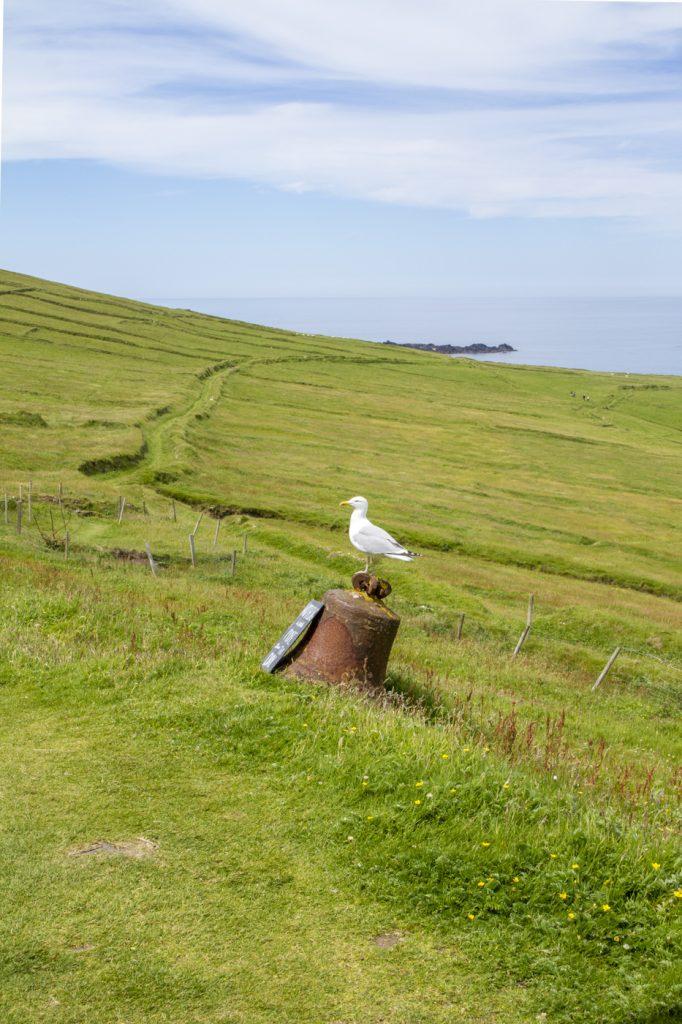 Oiseau aux îles Blasket