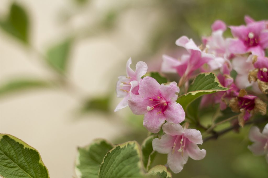 Fleurs à la Quinta da Regaleira